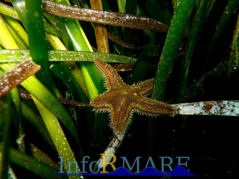 Fondali C.Berta - Diano Marina - Capo Mimosa - Fotografia concessa da Informare ASD