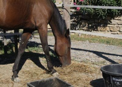 Piccolo-Ranch-San-Bartolomeo-al-mare-Foto-1