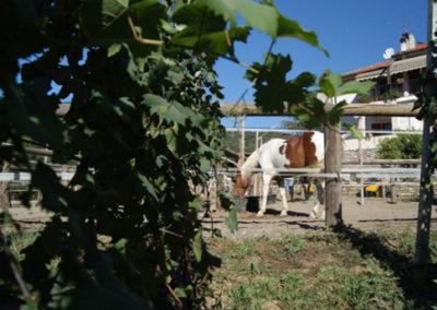 Piccolo-Ranch-San-Bartolomeo-al-mare-Foto-3
