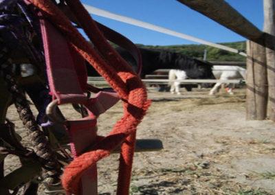 Piccolo-Ranch-San-Bartolomeo-al-mare-Foto-4
