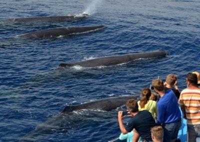 Whale-Watch-Escursione-1
