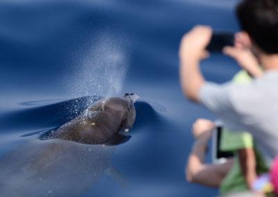 Whale-Watch-Escursione-2