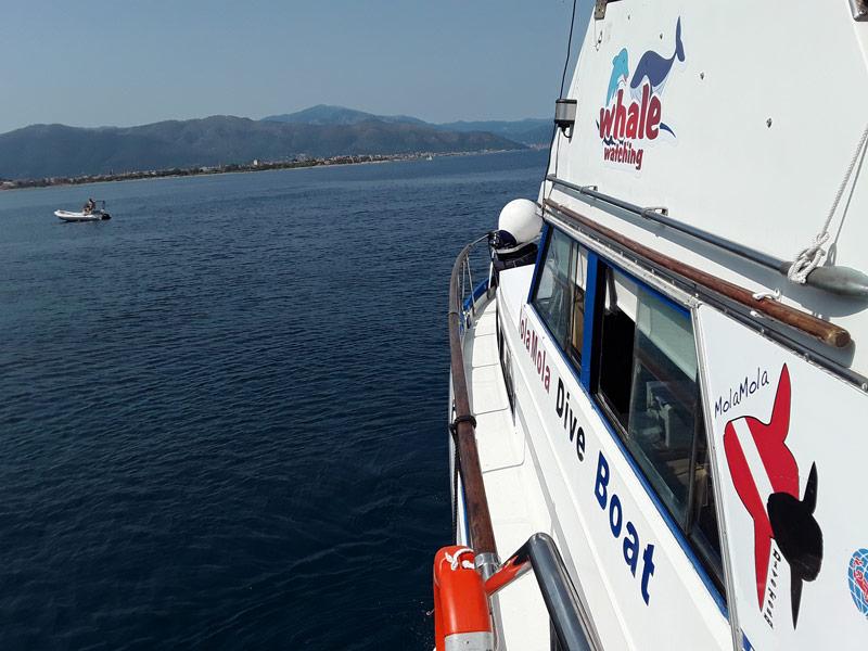 Tour all'isola Gallinara con MolaMola Dive Team
